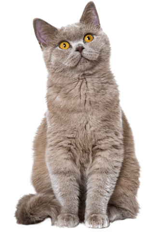 Galaxy cat Unlimited campagne